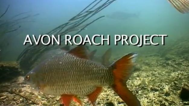 The Avon Roach Project.jpg