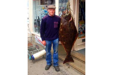 71lb halibut caught off Whitby, England