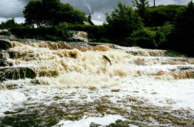 Falls Pool, River Forss, Caithness.