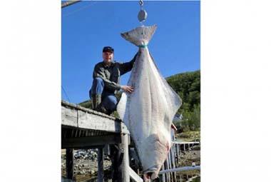 world record halibut 427lb