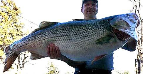 Rodney Ply striped bass