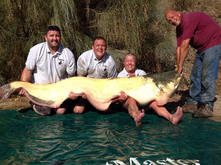 First 200lb Albino Catfish For British Angler