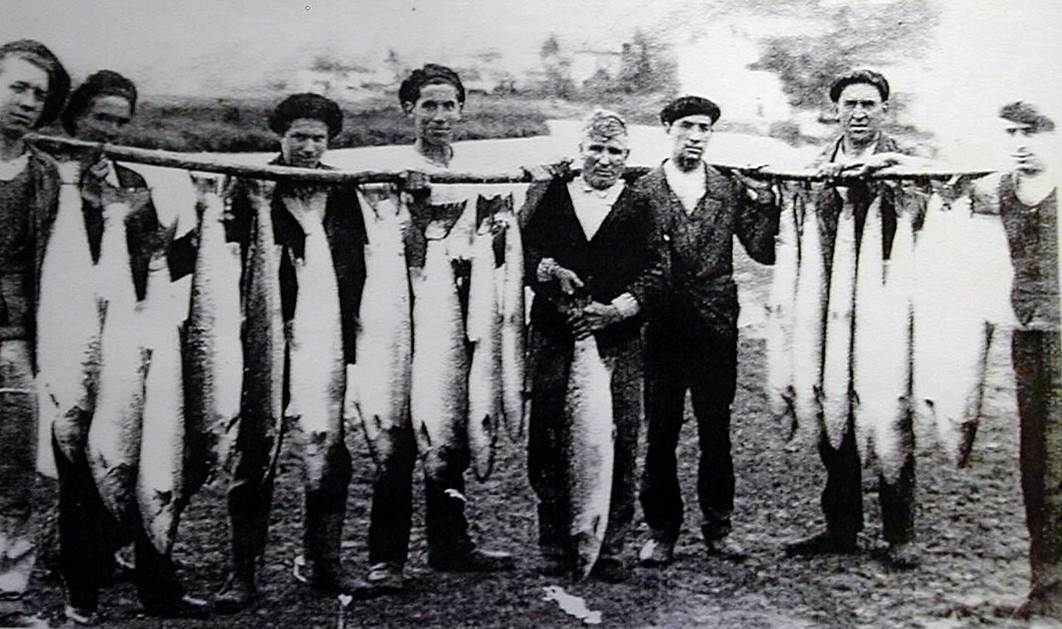 Shrinking fish research picture of old salmon fishermen spain 2.jpg