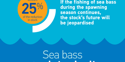 Protecting sea bass poster.png
