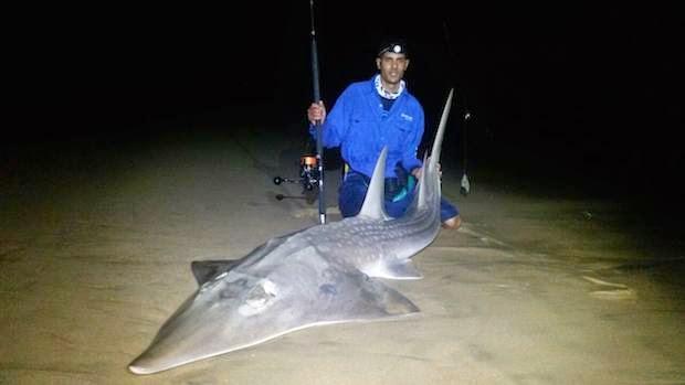 world record guitar fish