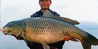 world record common carp 2015.jpg