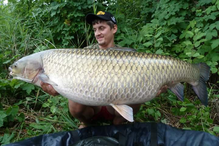 Near 70lb grass carp total fishing for Grass carp fish
