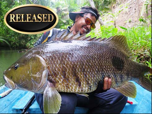 freshwater snapper world record.jpg