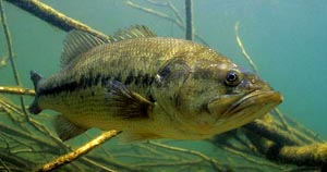 how to catch freshwater bass on lures