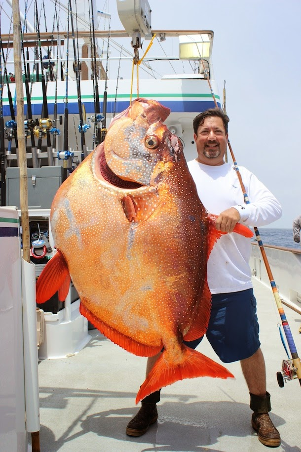 world record opah.jpg
