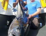 A tuna estimated at 300lb caught off the Welsh coast in 2016.