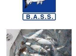 bass-nets