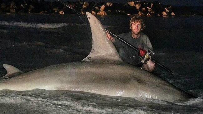 largest hammerhead shark - photo #18