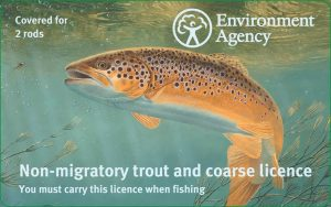 Brown trout two-rod fishing licence.