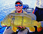 A big peacock bast from the best Amazon fishing destination