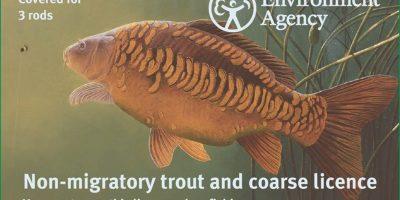 Mirror carp 3 rod fishing licence