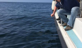 Massive six gill shark caught off ireland