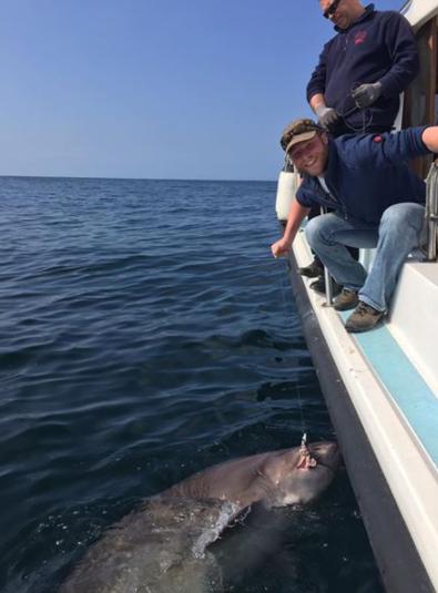 Massive six gill shark caught off ireland
