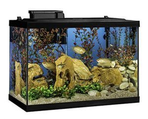 Owning a fish tank or garden pond can help you learn about fish behaviour and feeding patterns.