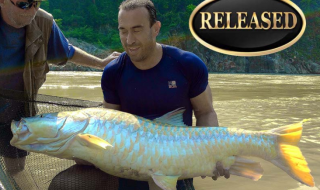 world record golden mahseer