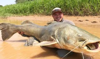 Martin Content 170lb Amazon Jau Catfish