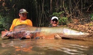 The best arapiama fishing in the world