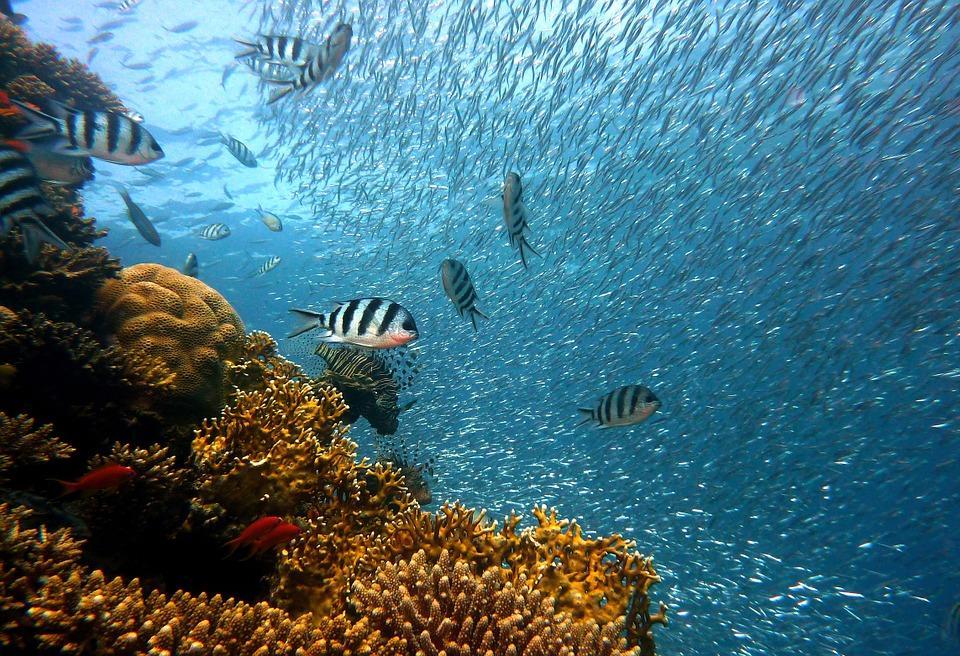 Deep Sea Dosh Online Slots