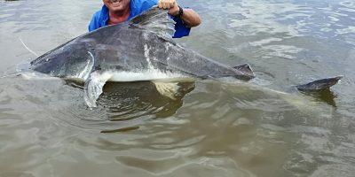 Lau catfish or Paraiba
