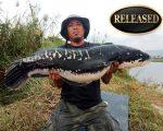 world record snakehead