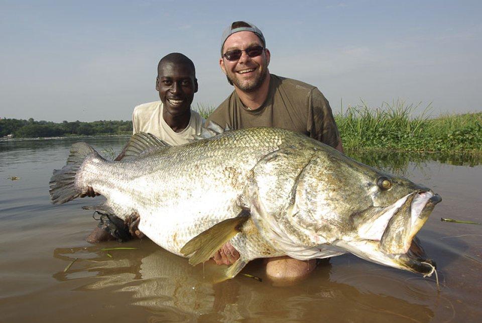 nile perch murchison falls national park uganda
