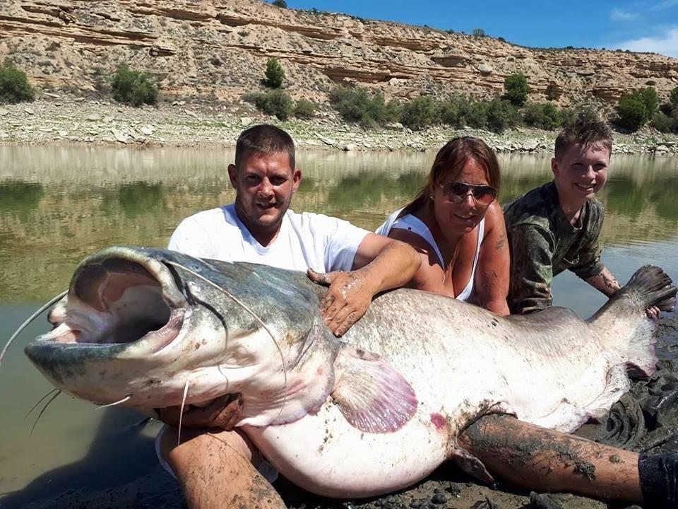 wels catfish river ebro spain