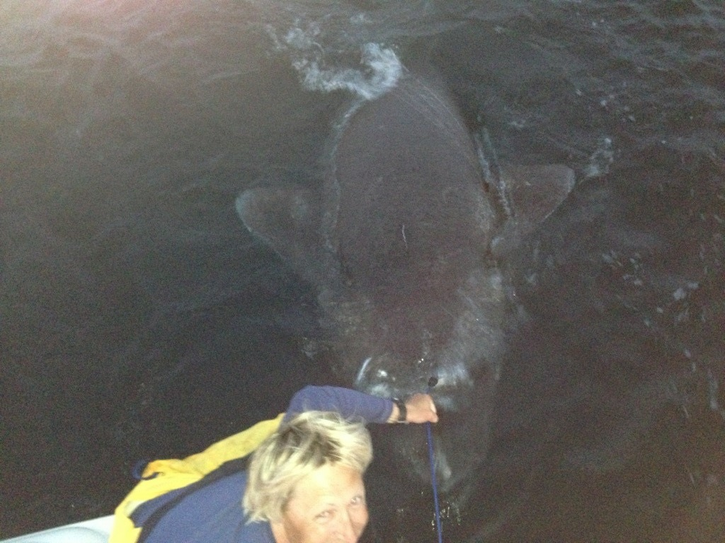 world record greenland shark