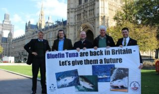 Uk anglers call for catch and release blue fin tuna fishery