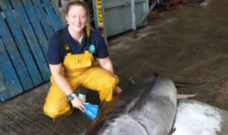 Atlantic bluefin tuna found in Chichester Harbour
