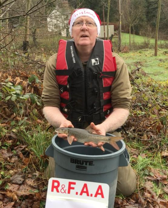 250 baby barbel for river Severn