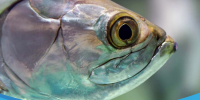 Fish Welfare in the UK controversial Report