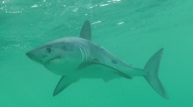 shark survey